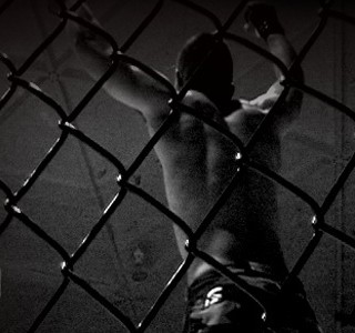Betting on MMA Online